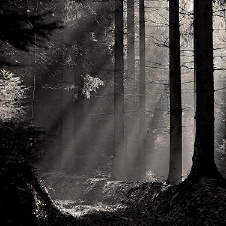 Morgens im Hestenberg