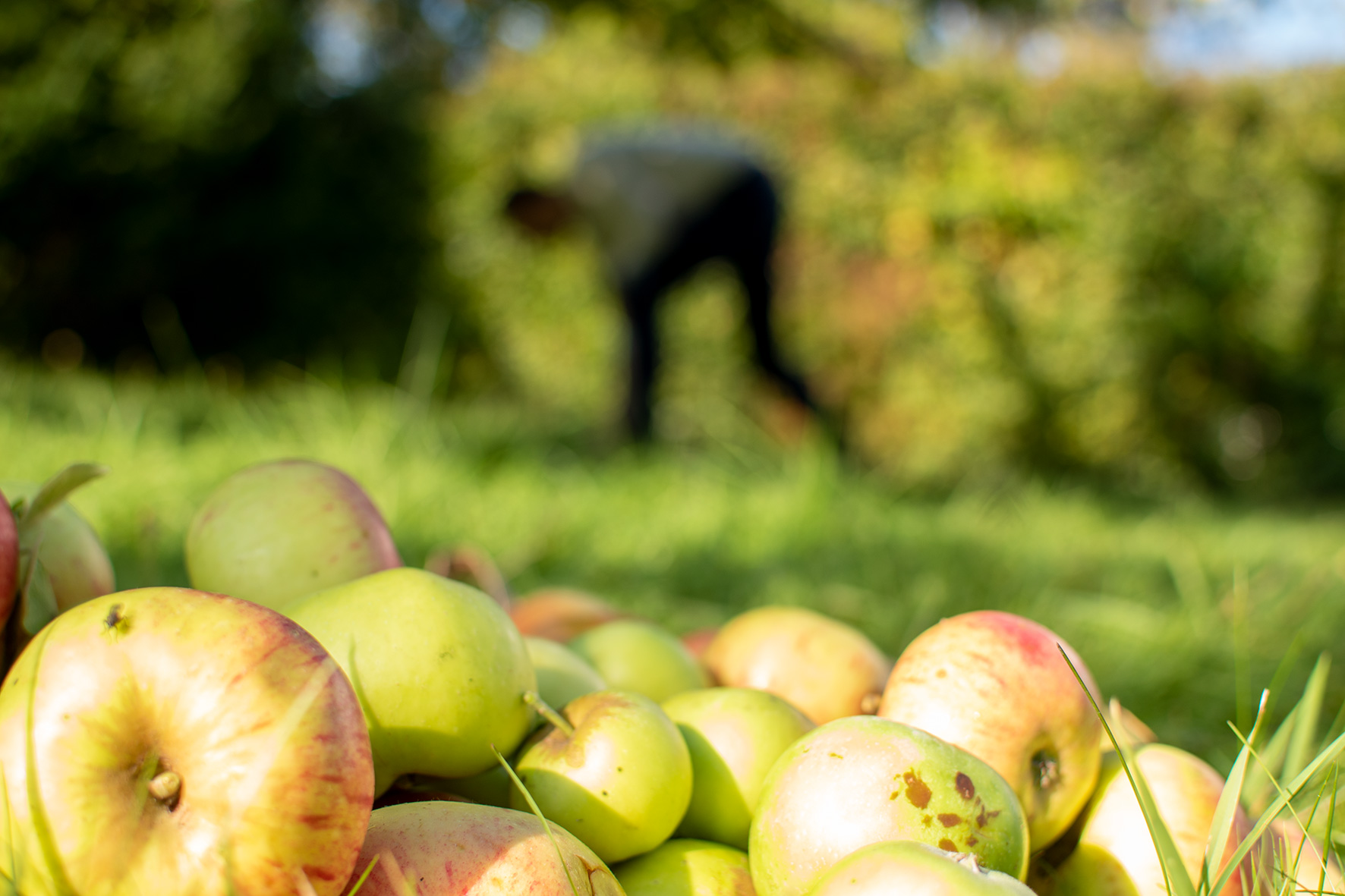 Obstgarten am Hirtenböhl